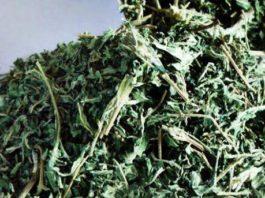 Растение «вечной молодости»: снижает уровень сахара, очищает почки, устраняет выпадение волос, омолаживает кожу