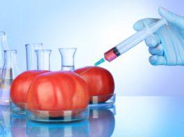 Черный список генетически модифицированных продуктов