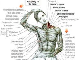 Шея – ключ к здоровью всего организма! Проверяем состояние своей шеи и избавляемся от защемленности