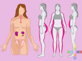 Кортизол, эстроген, инсулин: Как правильным питанием сбалансировать главные гормоны