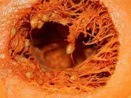 Тыква вызывает необратимые процессы в организме! Такую информацию нужно знать!