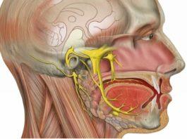 Домашнее лечение воспаления тройничного нерва — жить без боли и страданий!