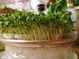Мощная целебная сила чиа: 5 способов использования всего растения!