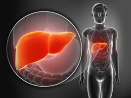 Печень: 7 ранних симптомов дисфункции и риска развития болезней!