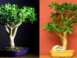 Наверняка, у вас дома растет это растение: научись его использовать правильно!