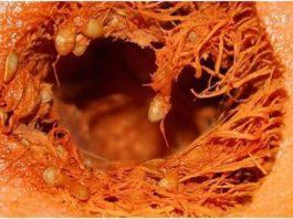 Тыква вызывает в организме необратимые процессы! Такую информацию нужно знать!