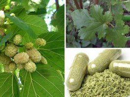 Это растение повсюду, но вы понятия не имели, что оно может лечить опухоли, диабет и высокое кровяное давление