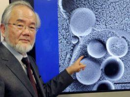 Нобелевская премия 2016 года: как очистить организм и обрести молодость