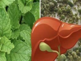С одним листом мяты перечной вы очистите свой желудок, обновите состояние печени, а также попрощаетесь с гастритом