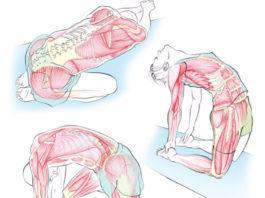 Кинезитерапия: 20 упражнений от Сергея Бубновского