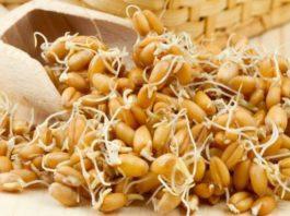 Проросшая пшеница способна вылечить весь организм